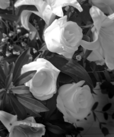 White Roses Love Poem Tessa Saks